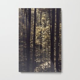 Brown light in the forest Metal Print