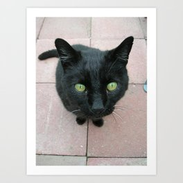 XSTACY KITTY, BIG KITTY, SAN JOSE CALIF Art Print