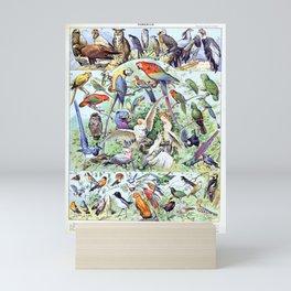 Adolphe Millot - Oiseaux A - French vintage poster Mini Art Print