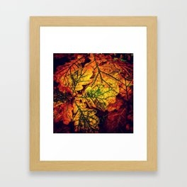 Autumn Leave Glow Framed Art Print