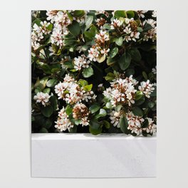 White Wall Florals Poster