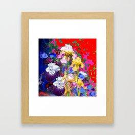 Decorative Spring  Garden Yellow & Pink Iris in Blue-Red Framed Art Print