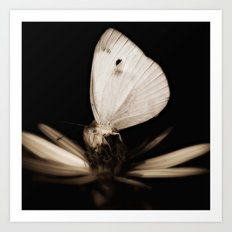 Paperwhite Art Print