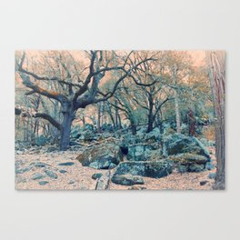 Old Oak Shady Spot Canvas Print