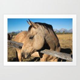 Shy - Horse Plays Coy in Western Wyoming Art Print