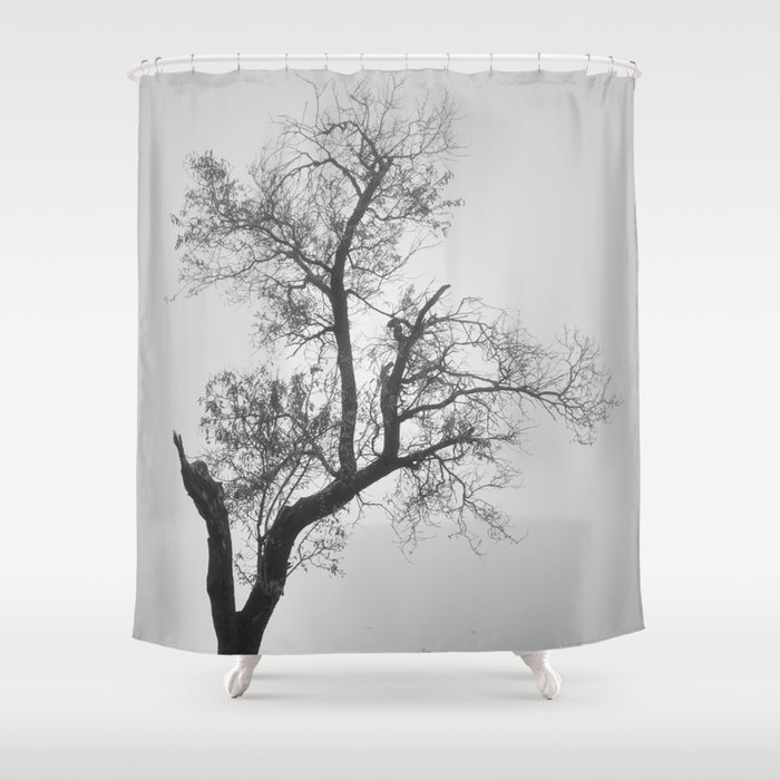 Zen Tree Shower Curtain By Guidomontanes