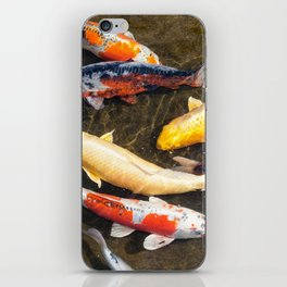 Diverse school of Japanese Koi fish swim together in pond iPhone Skin