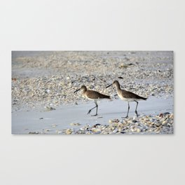 Willets in the Winter Canvas Print
