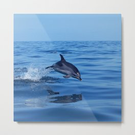 Spotted dolphin jumping in the Atlantic ocean Metal Print