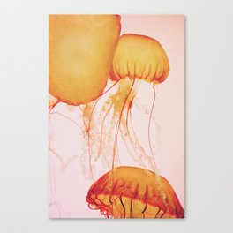Trailing Tentacles Canvas Print