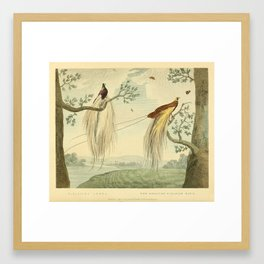 """""""The Greater Paradise Bird"""" from the collection of the Leverian Museum, 1790s Framed Art Print"""