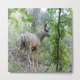 Deer in Zion's National Park Metal Print