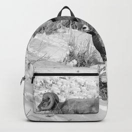 2 Amazing Bighorn Sheep in Black and White by OLena Art for #Society6 Backpack