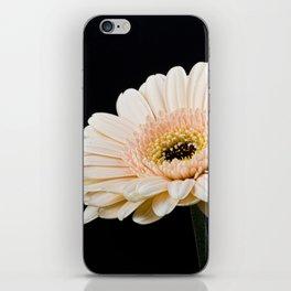 Peach Gerbera Daisy On Black iPhone Skin