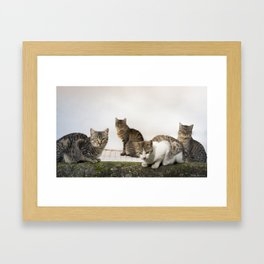 Picture of cats Framed Art Print