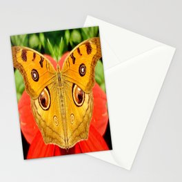Meadow Argus Butterfly Stationery Cards