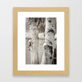 Snow on Birch Framed Art Print
