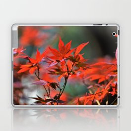 Scarlet Japanese Maple Leaves Laptop & iPad Skin