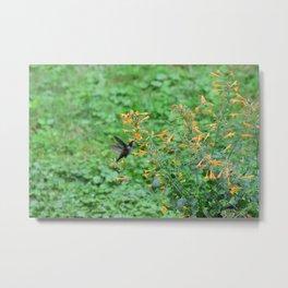 Hummingbird and orange agastache 51 Metal Print