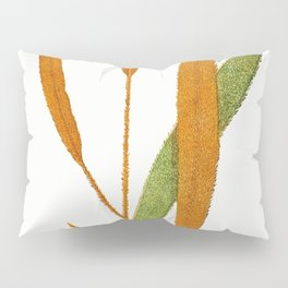 Edward Joseph Lowe - Acrostichum Cuspidatum Pillow Sham