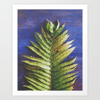 fern Art Prints featuring Fern by Olivia Joy StClaire