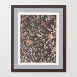 Forest litter #1 Canvas Print
