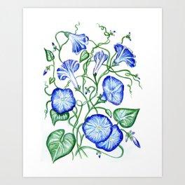 Morning Glory Vine Art Print