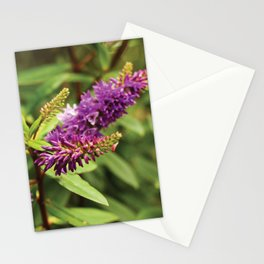 The Lovelies  Stationery Cards