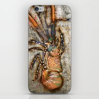 lobster iPhone & iPod Skins featuring Lobster by Buster Fidez