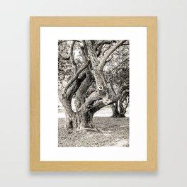 Arboreal Animal Framed Art Print