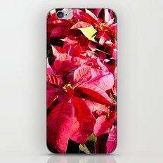 Poinsettia I iPhone & iPod Skin