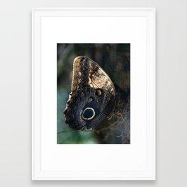 Mourning Owl Butterfly Framed Art Print