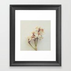Floral Variations No. 8 Framed Art Print