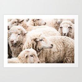 Wall to wall sheep Art Print