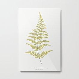 Gymnogramma Chrysophylla from Ferns British and Exotic (1856-1860) by Edward Joseph Lowe. Metal Print