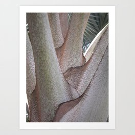Bismarck Palm Art Print