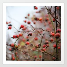 Winter Rosehips Art Print