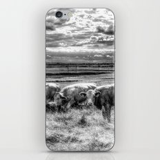 Late Afternoon Cows iPhone & iPod Skin