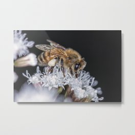 Autumn Honeybee Metal Print