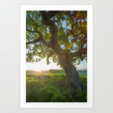 Morning In Danville Art Print