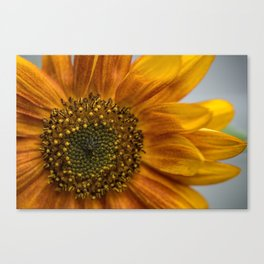 Sunflower in red Canvas Print