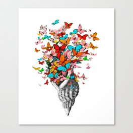 Butterfly Shell Canvas Print