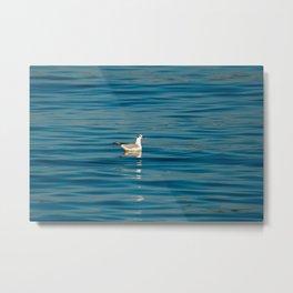 Blackhead gull 1063 Metal Print