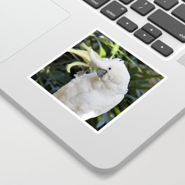 Sulfur-Crested Cockatoo Salutes the Photographer Sticker