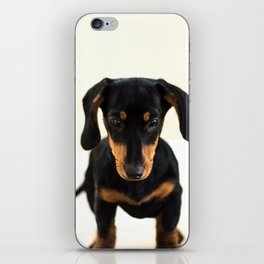 Weenie dog (color) iPhone Skin