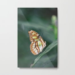 Enchanted Butterfly in Green Metal Print