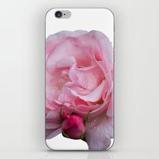 isolated pink rose whit bud iPhone & iPod Skin