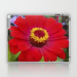 Red zinnia - blazing ring of fire Laptop & iPad Skin