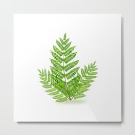 Acacia tree branch Metal Print