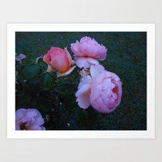 Roses in the Mist Art Print